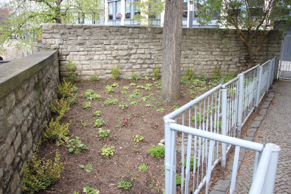 Bepflanzung Beet Haupteingang 2016/17